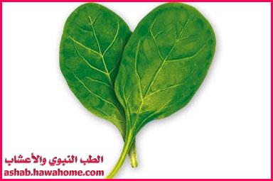 نبات السبانخ وفوائده الطبية